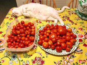 Ollie and tomatoes